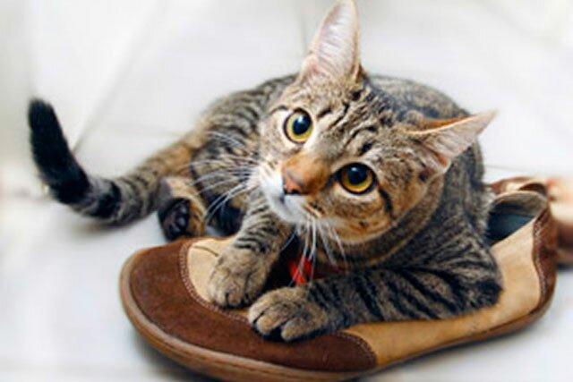 Обувь из кожзаменителя: избавляемся от запаха